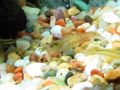 20081029_45minamiosu.jpg